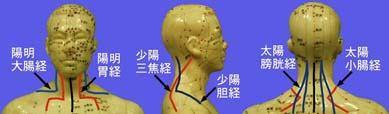 図1-2 頭頚部における同名経分布の特徴