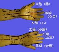図2-7 手における経絡分布